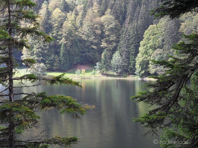 Der Feldsee